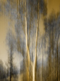 Composited Image of Trees Photographic Print by Diane Miller