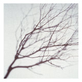 Silhouette of a Tree Branch Giclee Print by Daniel Root