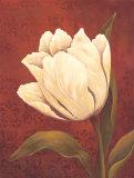 Tulip on Red Prints by Ella Belamar