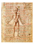 Anatomical Chart of Human Body, Tractatabus de Pestilentia, 15th century Manuscript by M. Albik Giclee Print