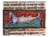 Merhorse, from 13th century Manuscript De Natura Rerum (Things of Nature) by Saint Albertus Magnus Giclee Print