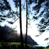 Two Trees on Edge of Lake and Forest at Sunrise, Smuggler Cove, Oregon, USA Photographic Print by Deon Reynolds