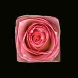 Cubic Pink Rose Photographic Print by Winfred Evers