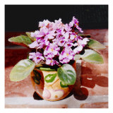 African Violet in Bright Light Giclee Print by Rich LaPenna