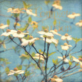 Dogwood I Print by Amy Melious