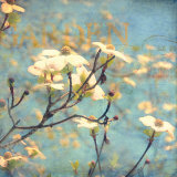Dogwood II Prints by Amy Melious