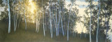 Hillside Birches Prints by Elissa Gore