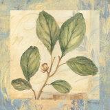 Leaf Botanicals I Art par Pamela Gladding