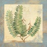 Leaf Botanicals II Posters par Pamela Gladding