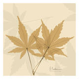 Color Me Maple Natural I Posters by Albert Koetsier