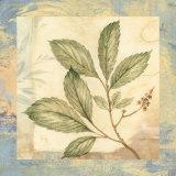 Leaf Botanicals III Affiches par Pamela Gladding