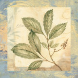 Leaf Botanicals III Prints by Pamela Gladding
