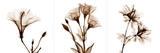 Sepia Floral I Art by Albert Koetsier