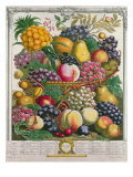 October, from 'Twelve Months of Fruits', by Robert Furber Giclee Print by Pieter Casteels