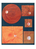 The Eye Seen Through a Microscope, from &#39;Atlas of Ophthalmoscopy&#39;, published in Paris, 1870 Giclee Print by Richard Liebreich