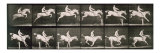 Man and horse jumping a fence, plate 643 from 'Animal Locomotion', 1887 Giclee Print by Eadweard Muybridge