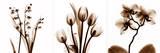 Sepia Floral II Print by Albert Koetsier