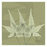 Color Me Maple Green II Posters by Albert Koetsier