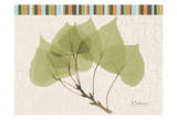 Trimmed Aspen Prints by Albert Koetsier
