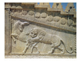 Lion Fighting a Bull, Relief on the East Staircase of the Apadana, Achaemanian Period, c.515 Giclee Print by  Achaemenid