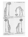 Les Pourquoi De Monsieur Toto', Caricature of Darwin's Theory of Evolution, C.1900 Giclee Print by Emmanuel Poire Caran D'ache