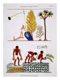 Getting Water and Watering Vegetables, from Rare Record of Frescoes from Thebes, recorded 1819-1822 Giclee Print by Frederic Cailliaud