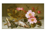 Still Life Depicting Flowers, Shells and a Dragonfly Giclee Print by Balthasar van der Ast