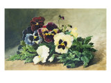 Winter Pansies, 1884 Giclee Print by Louis Bombled