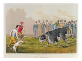 Bull Baiting', pub. by Thomas McLean, 1820 Giclee Print by Henry Thomas Alken