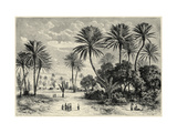 Oasis of Gafsa: Tunis Giclee Print by Charles Barbant