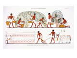 Fruit Picking, from a Rare Record of Frescoes from Thebes, recorded 1819-1822 Giclee Print by Frederic Cailliaud