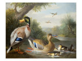 Ducks in a River Landscape Giclee Print by Jakob Bogdani Or Bogdany