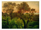 Slope with Olive Trees Giclee Print by Louis Gurlitt