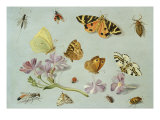 Butterflies, Moths and other Insects with a Sprig of Periwinkle Giclee Print by Jan Van, The Elder Kessel