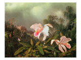 Jungle Orchids and Hummingbirds, 1872 Giclee Print by Martin Johnson Heade