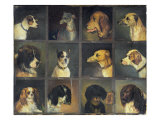 Twelve Favourite Dogs, 1883 Giclee Print by Edwin Frederick Holt