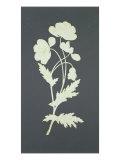 Flower Giclee Print by Philipp Otto Runge