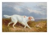 A Setter on the Moor Giclee Print by Philip Reinagle