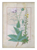 Poppy and Figwort, Illustration from 'The Book of Simple Medicines' by Mattheaus Platearius Giclee Print by Robinet Testard