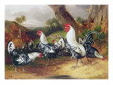 Cockerels in a Landscape Giclee Print by William Joseph Shayer