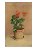 Geraniums in a Pot, c.1905 Giclee Print by Odilon Redon