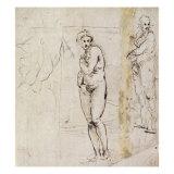 Study of Venus Giclee Print by  Raphael