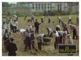 The Shawshank Redemption, German Movie Poster, 1994 Premium Giclee Print