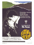 Splendor in the Grass, Spanish Movie Poster, 1961 Posters