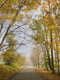Rural Road in Autumn at Dawn, Vermont Lámina fotográfica por John Churchman