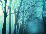 Atmospheric Image of Trees in Mist Photographic Print by Steve Parry