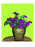 Petunia in Pot Giclee Print by Rich LaPenna