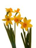 Abdul Kadir Audah - Spring Flowers - Fotografik Baskı