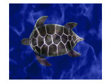 Seaturtle in Deep Blue Water Giclee Print by Rich LaPenna