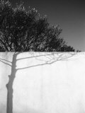 Tree Trunk Shadow on a Wall Photographic Print by Rob Lang